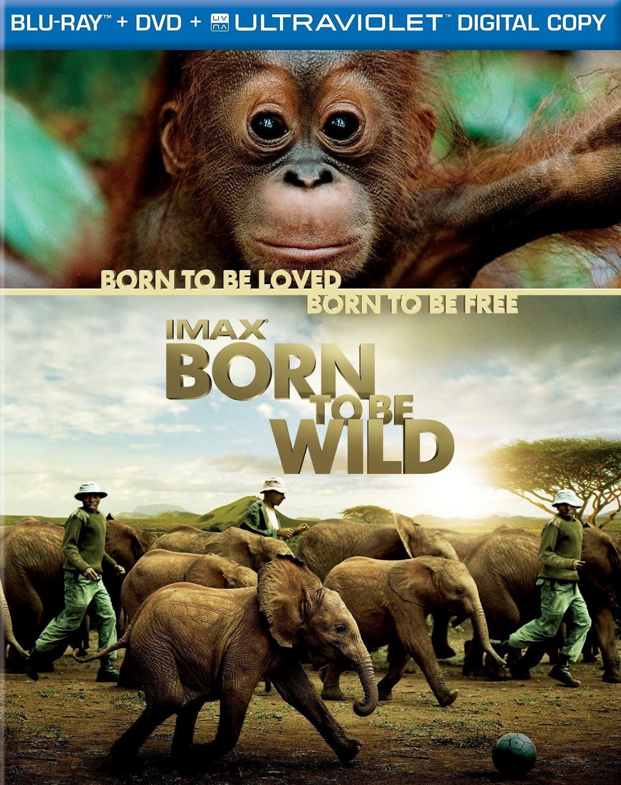 ველურებად დაბადებულნი / Born to Be Wild
